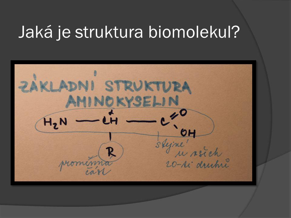 Jaká je struktura biomolekul?