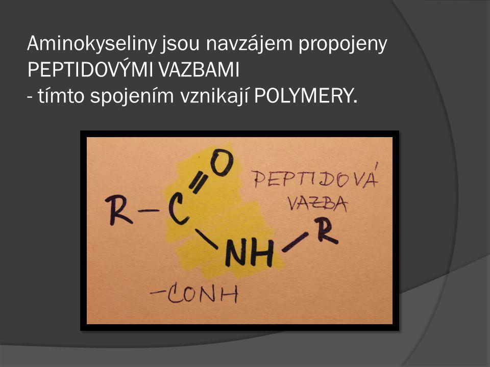 Aminokyseliny jsou navzájem propojeny PEPTIDOVÝMI VAZBAMI - tímto spojením vznikají POLYMERY.