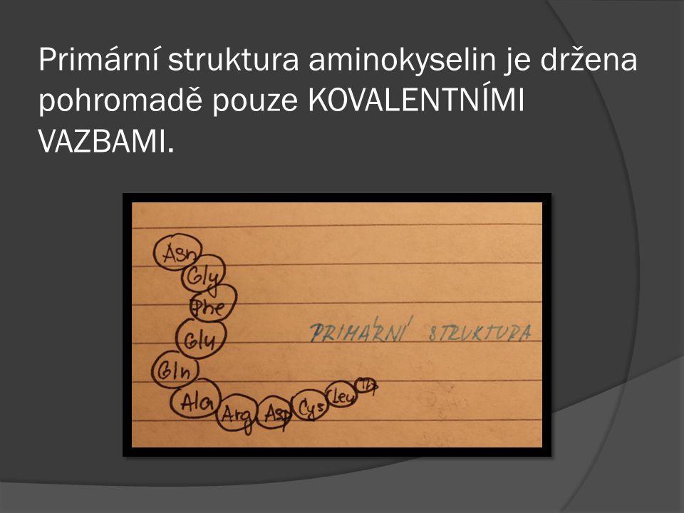 Primární struktura aminokyselin je držena pohromadě pouze KOVALENTNÍMI VAZBAMI.