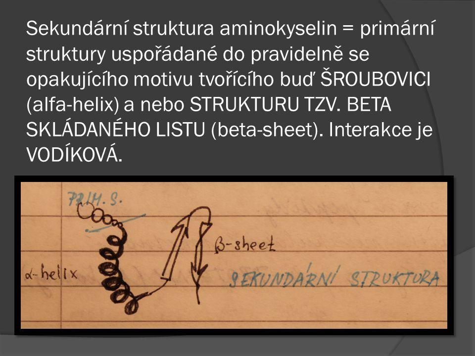 Sekundární struktura aminokyselin = primární struktury uspořádané do pravidelně se opakujícího motivu tvořícího buď ŠROUBOVICI (alfa-helix) a nebo STRUKTURU TZV.