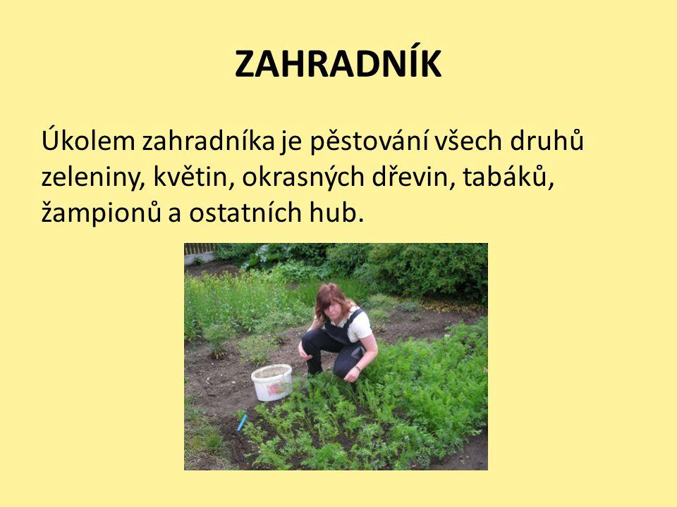 ZAHRADNÍK Úkolem zahradníka je pěstování všech druhů zeleniny, květin, okrasných dřevin, tabáků, žampionů a ostatních hub.