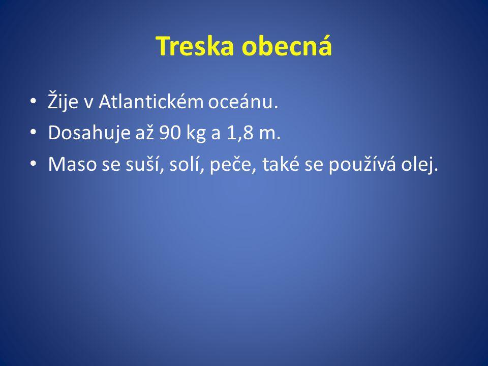 Treska obecná Žije v Atlantickém oceánu.Dosahuje až 90 kg a 1,8 m.