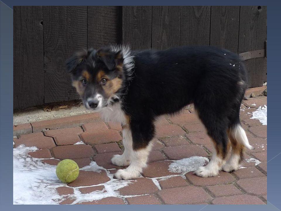 A hele míčky, ještě nevím co mě s nima A hele míčky, ještě nevím co mě s nima čeká