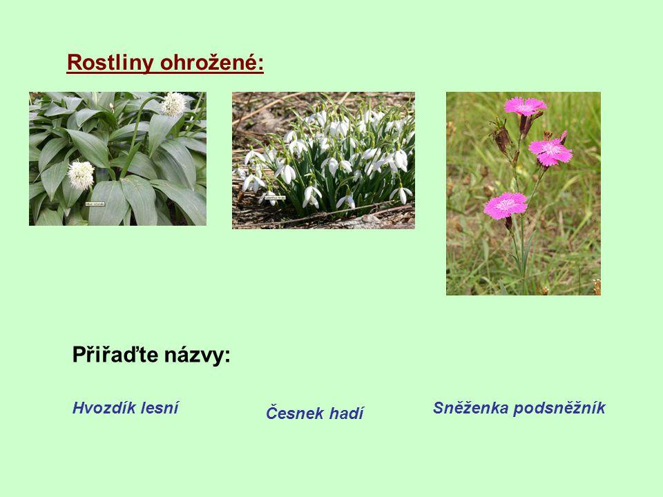 Rostliny ohrožené: Přiřaďte názvy: Hvozdík lesní Česnek hadí Sněženka podsněžník