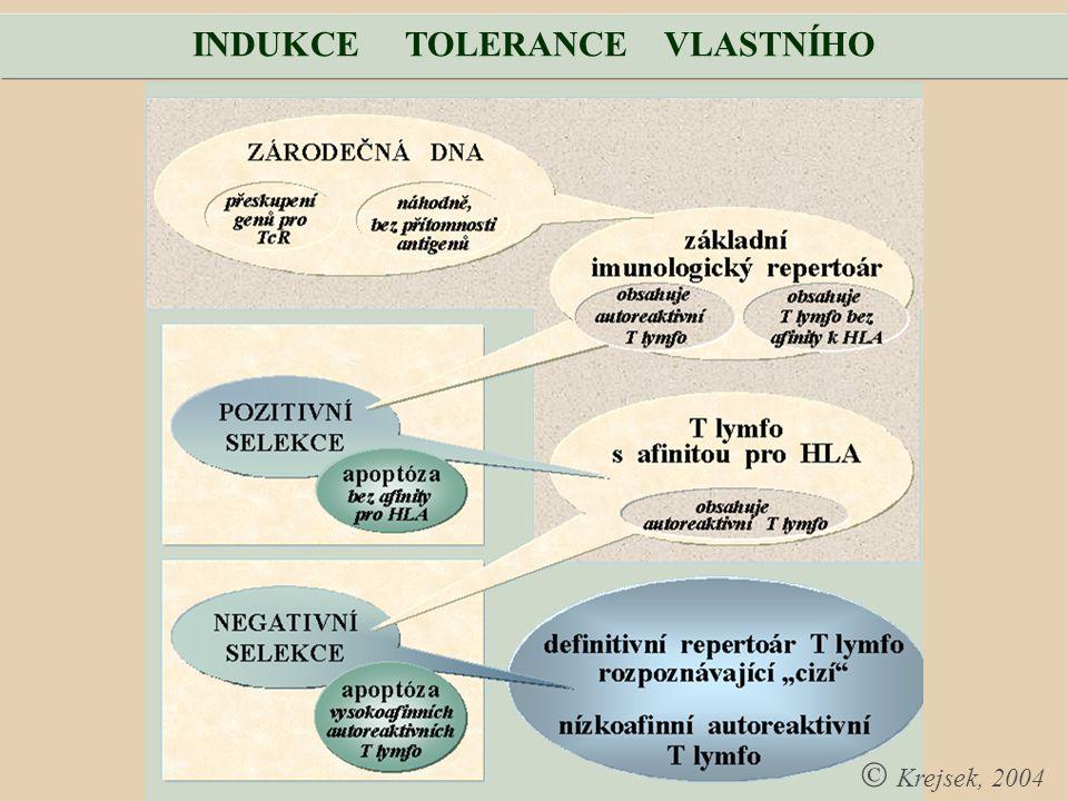 INDUKCE TOLERANCE VLASTNÍHO  Krejsek, 2004