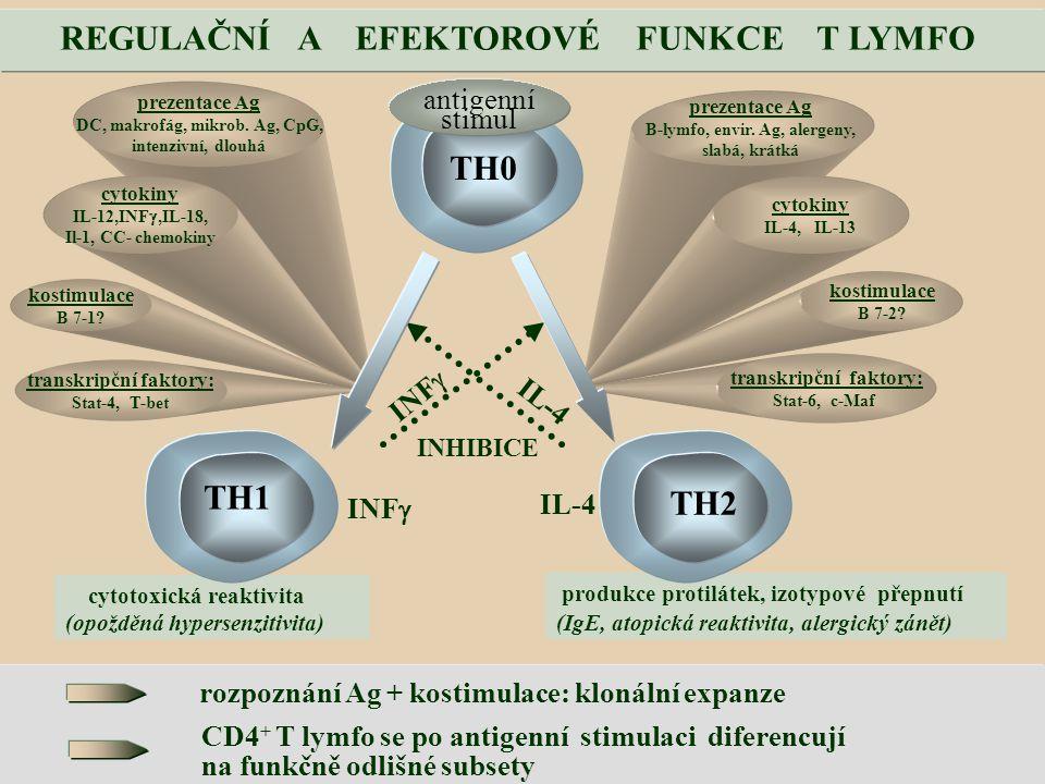 rozpoznání Ag + kostimulace: klonální expanze CD4 + T lymfo se po antigenní stimulaci diferencují na funkčně odlišné subsety prezentace Ag DC, makrofág, mikrob.