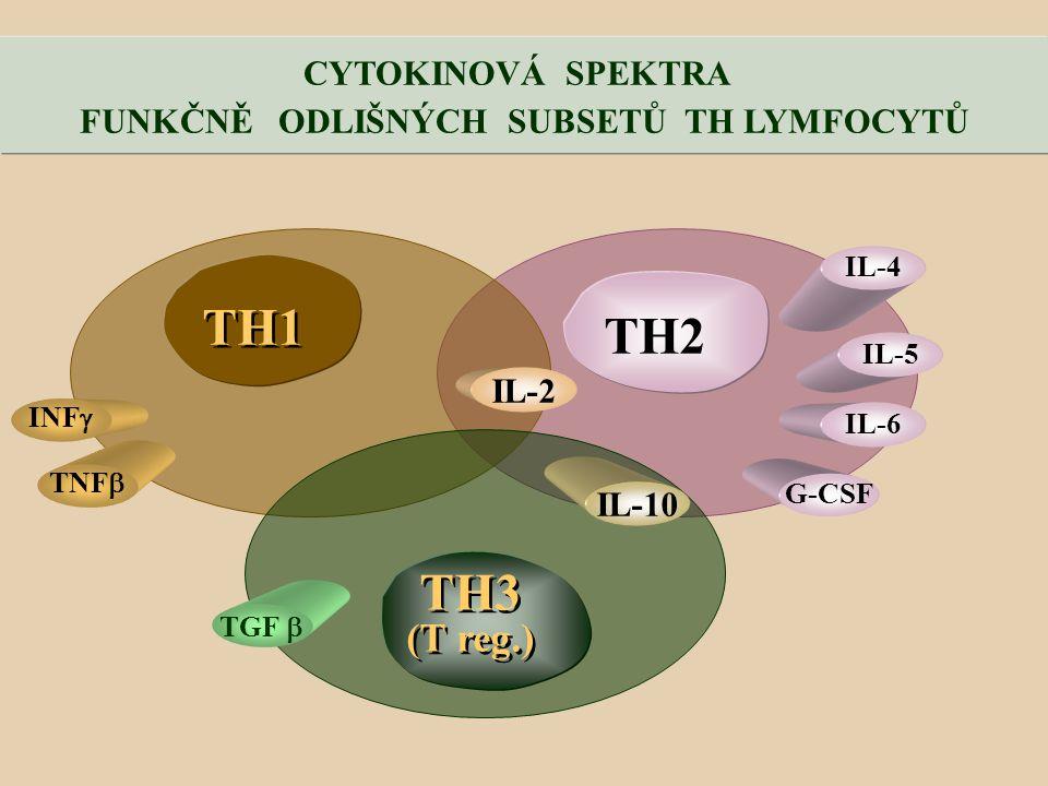 TH2 TH1 TH3 (T reg.) TH3 (T reg.) TNF  INF  TGF  IL-2 IL-10 G-CSF IL-6 IL-5 IL-4 CYTOKINOVÁ SPEKTRA FUNKČNĚ ODLIŠNÝCH SUBSETŮ TH LYMFOCYTŮ