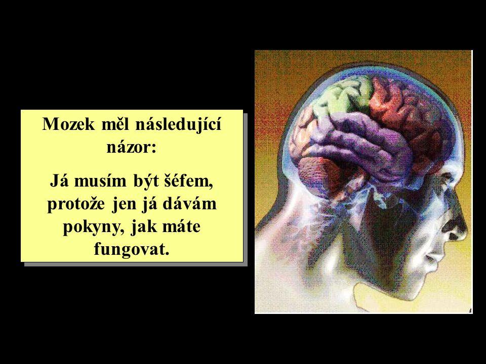 Mozek měl následující názor: Já musím být šéfem, protože jen já dávám pokyny, jak máte fungovat. Mozek měl následující názor: Já musím být šéfem, prot