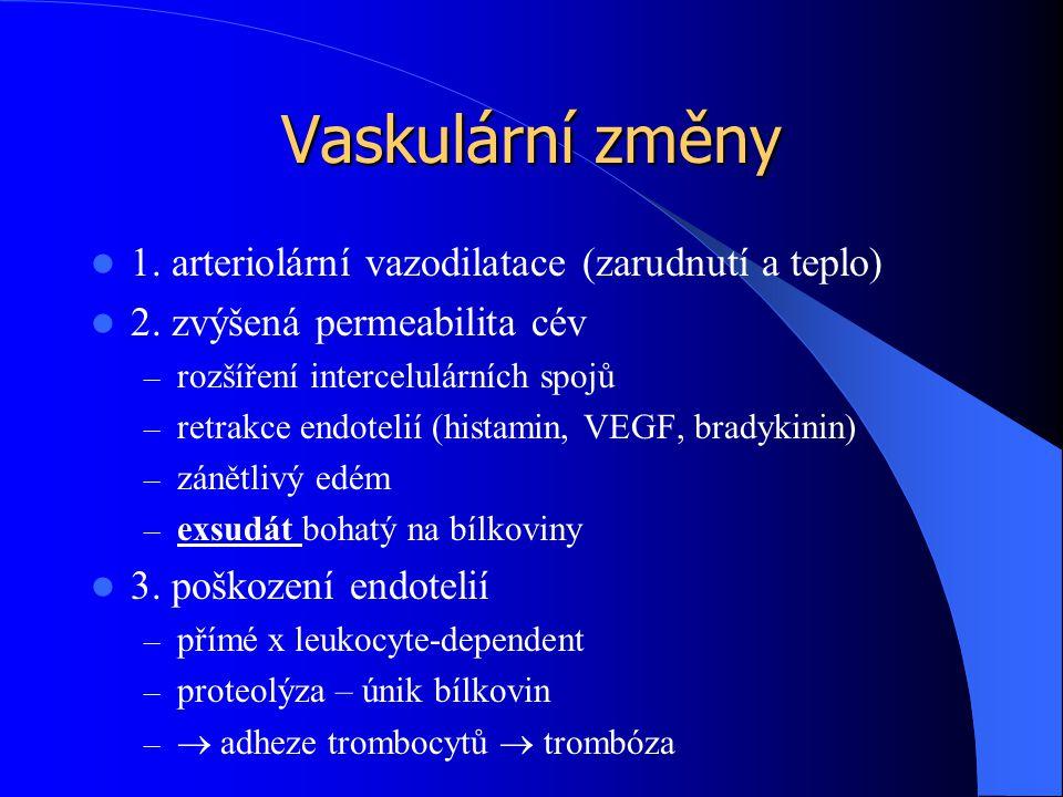 Vaskulární změny 1. arteriolární vazodilatace (zarudnutí a teplo) 2. zvýšená permeabilita cév – rozšíření intercelulárních spojů – retrakce endotelií