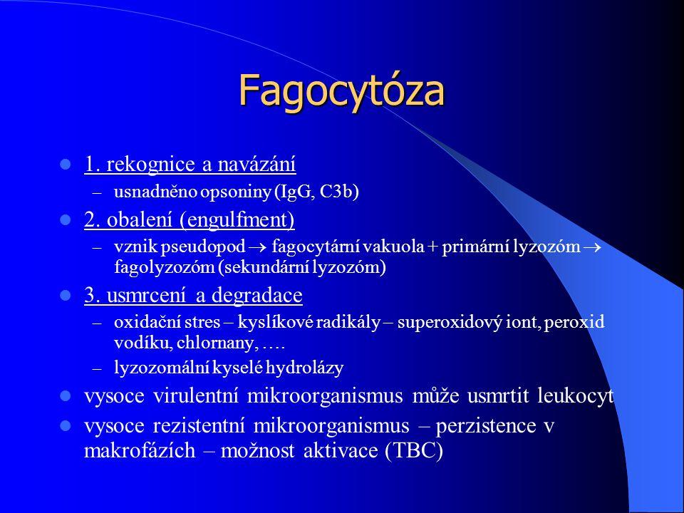 Fagocytóza 1. rekognice a navázání – usnadněno opsoniny (IgG, C3b) 2. obalení (engulfment) – vznik pseudopod  fagocytární vakuola + primární lyzozóm