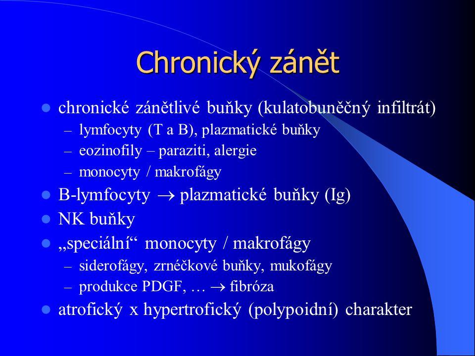 """Chronický zánět chronické zánětlivé buňky (kulatobuněčný infiltrát) – lymfocyty (T a B), plazmatické buňky – eozinofily – paraziti, alergie – monocyty / makrofágy B-lymfocyty  plazmatické buňky (Ig) NK buňky """"speciální monocyty / makrofágy – siderofágy, zrnéčkové buňky, mukofágy – produkce PDGF, …  fibróza atrofický x hypertrofický (polypoidní) charakter"""