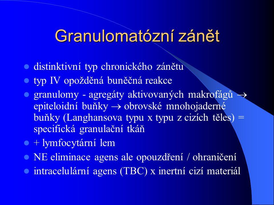 Granulomatózní zánět distinktivní typ chronického zánětu typ IV opožděná buněčná reakce granulomy - agregáty aktivovaných makrofágů  epiteloidní buňky  obrovské mnohojaderné buňky (Langhansova typu x typu z cizích těles) = specifická granulační tkáň + lymfocytární lem NE eliminace agens ale opouzdření / ohraničení intracelulární agens (TBC) x inertní cizí materiál