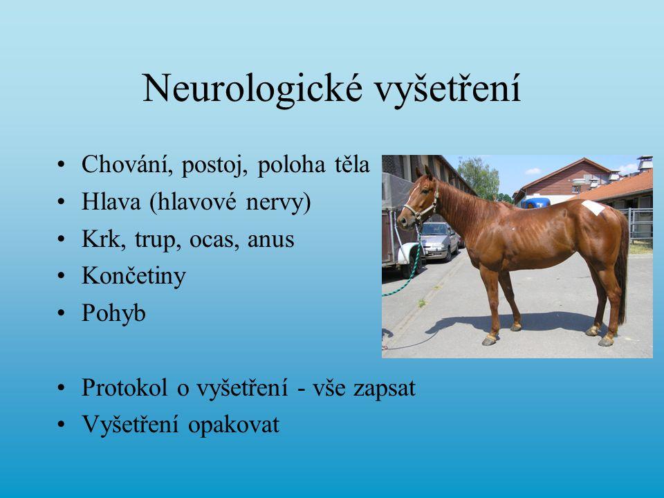Neurologické vyšetření Chování, postoj, poloha těla Hlava (hlavové nervy) Krk, trup, ocas, anus Končetiny Pohyb Protokol o vyšetření - vše zapsat Vyše