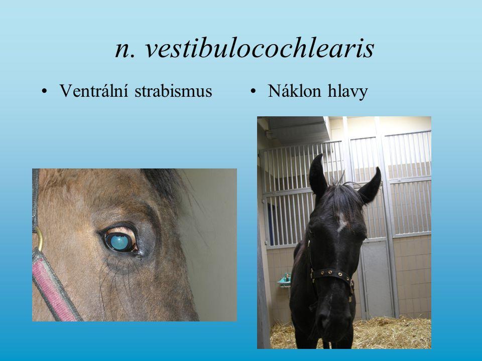 n. vestibulocochlearis Ventrální strabismusNáklon hlavy