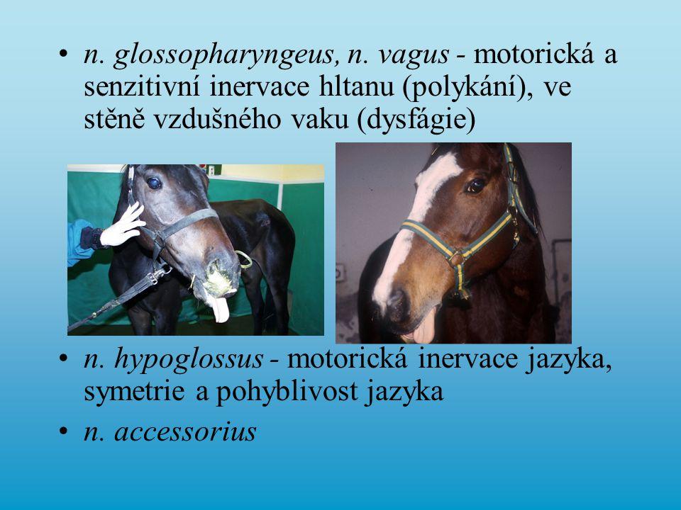 n. glossopharyngeus, n. vagus - motorická a senzitivní inervace hltanu (polykání), ve stěně vzdušného vaku (dysfágie) n. hypoglossus - motorická inerv
