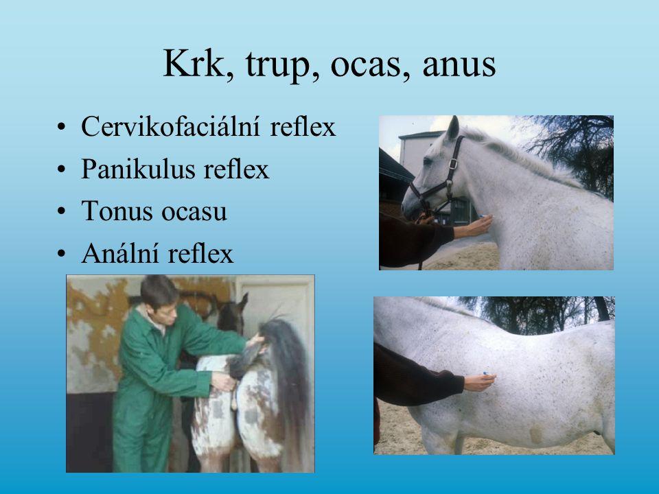 Krk, trup, ocas, anus Cervikofaciální reflex Panikulus reflex Tonus ocasu Anální reflex