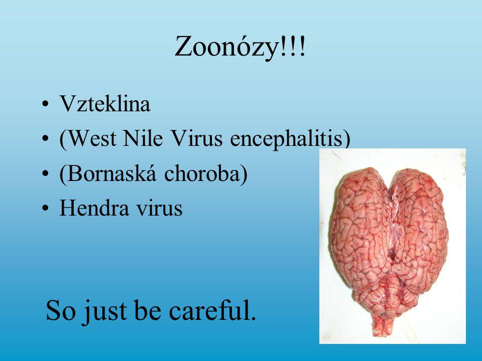 Zoonózy!!! Vzteklina (West Nile Virus encephalitis) (Bornaská choroba) Hendra virus So just be careful.