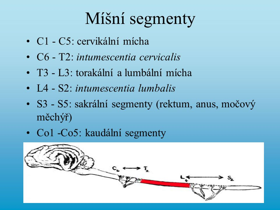 Krk, trup, ocas, anus Hypoestézie, anestézie, parestézie, hyperestézie Pohyblivost krku - kyčelní hrbol Symetrie osvalení (atrofie) Lokální pocení - x sympatiku (Hornerův syndrom, míšní trauma, …)