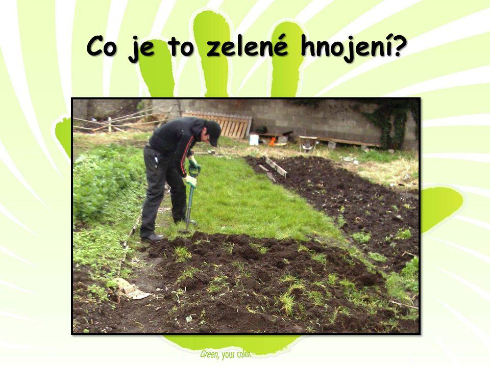 Co je to zelené hnojení?