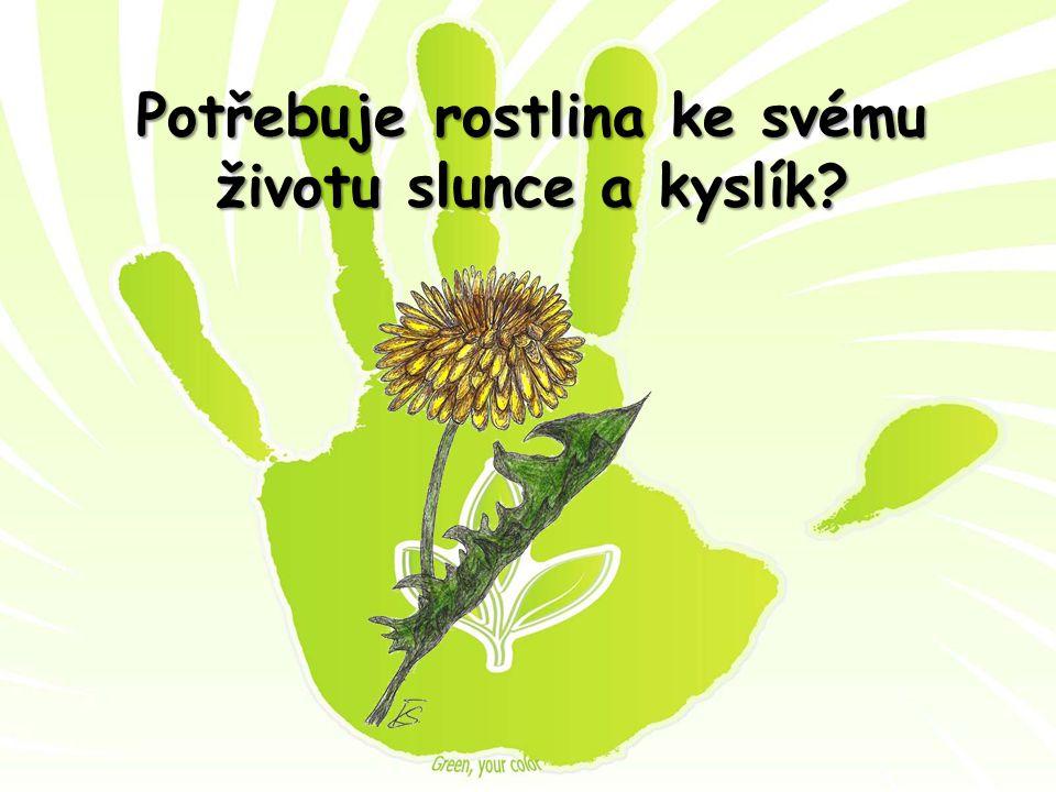 Potřebuje rostlina ke svému životu slunce a kyslík?