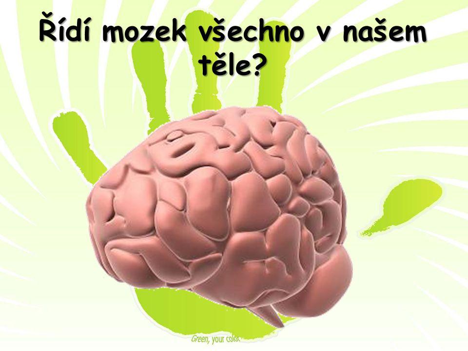 Řídí mozek všechno v našem těle?