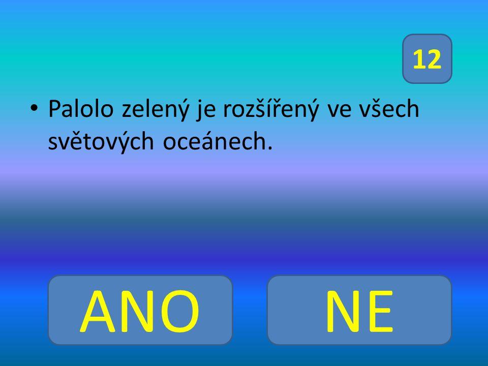Palolo zelený je rozšířený ve všech světových oceánech. ANONE 12