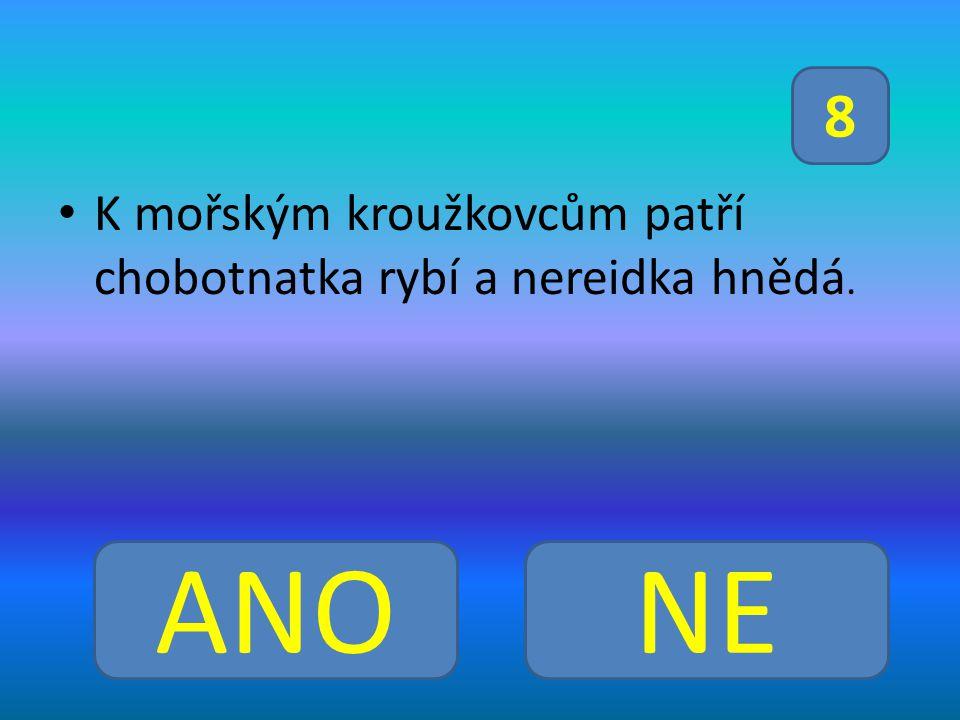 K mořským kroužkovcům patří chobotnatka rybí a nereidka hnědá. ANONE 8
