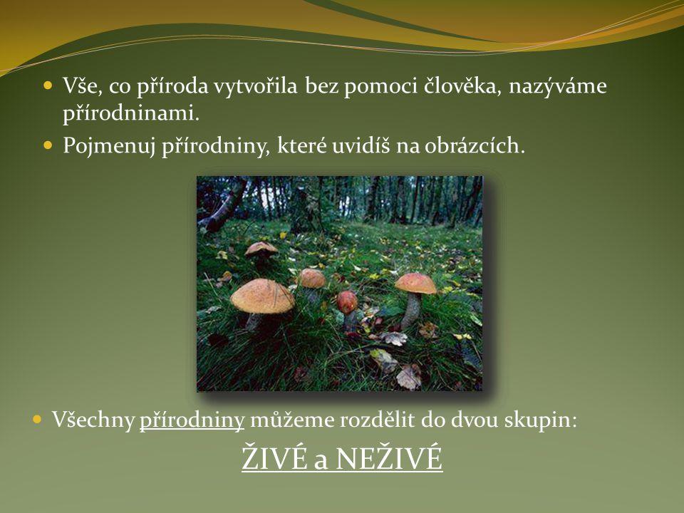 Vše, co příroda vytvořila bez pomoci člověka, nazýváme přírodninami. Pojmenuj přírodniny, které uvidíš na obrázcích. Všechny přírodniny můžeme rozděli
