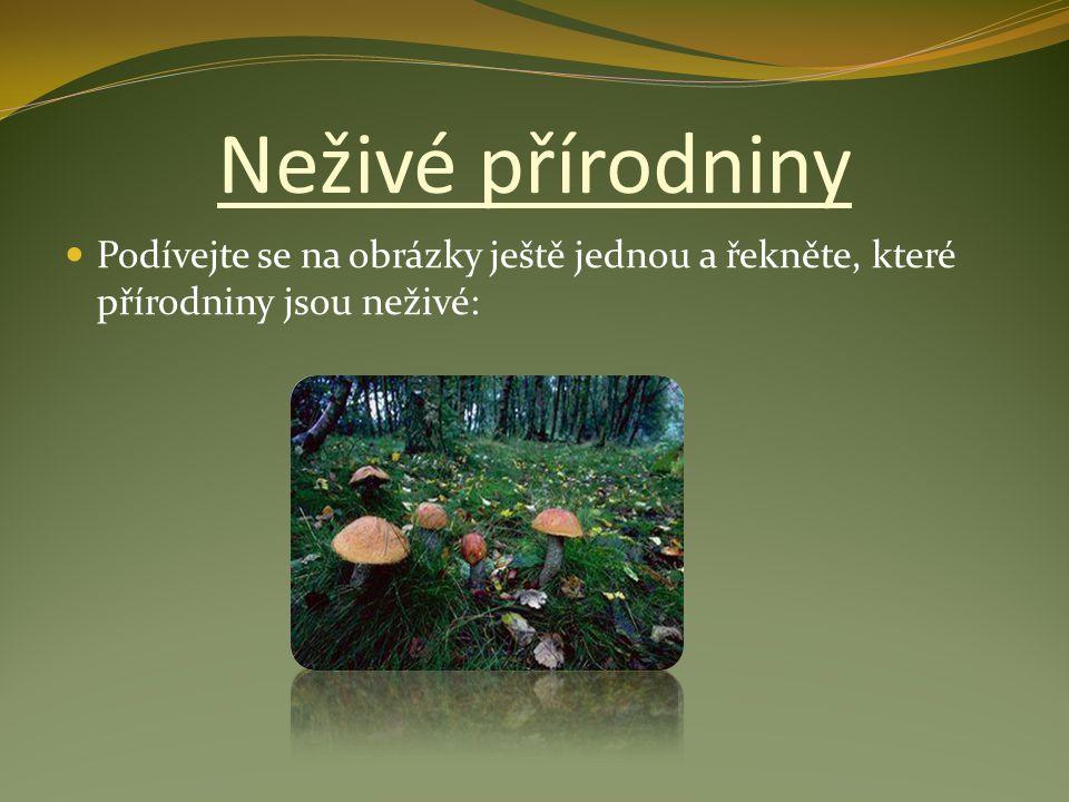 Podívejte se na obrázky ještě jednou a řekněte, které přírodniny jsou neživé: Neživé přírodniny