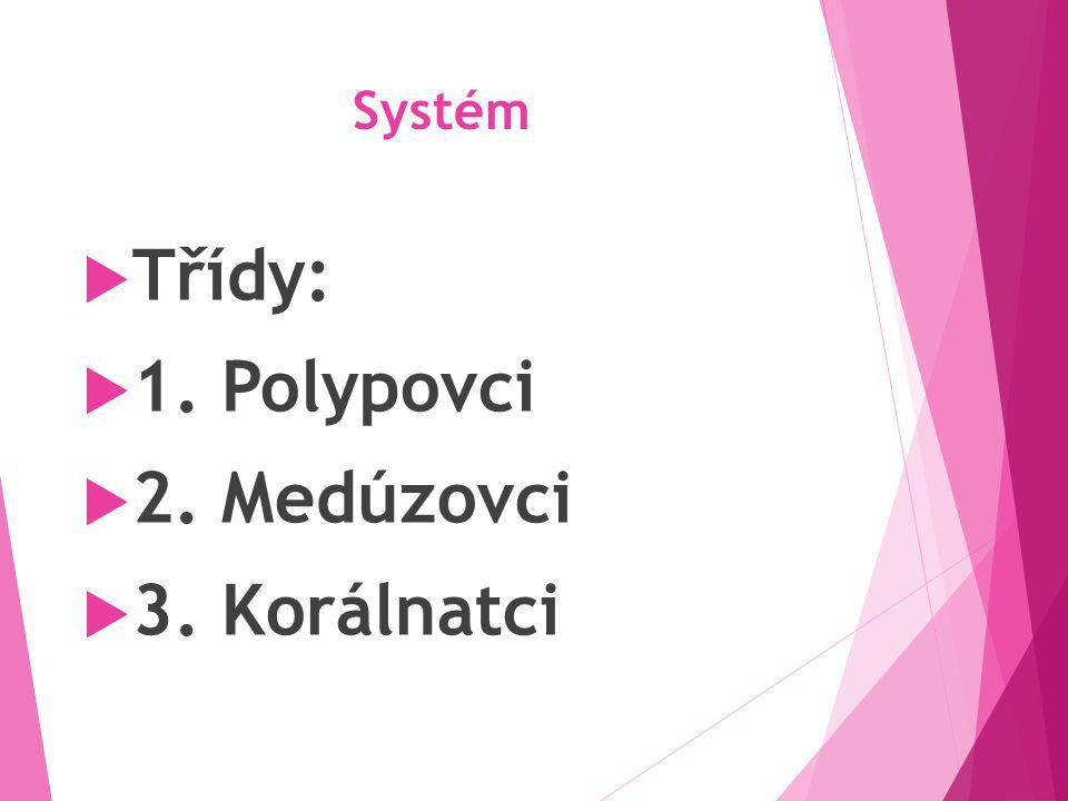 Systém  Třídy:  1. Polypovci  2. Medúzovci  3. Korálnatci