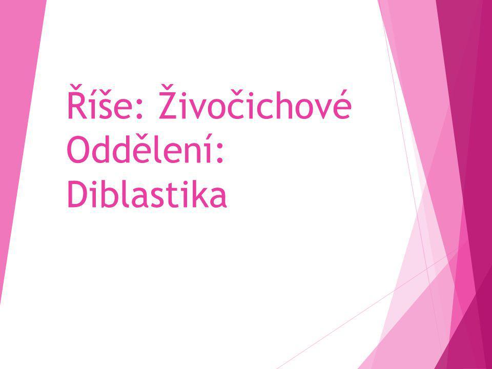 Říše: Živočichové Oddělení: Diblastika