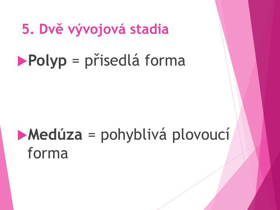 5. Dvě vývojová stadia  Polyp = přisedlá forma  Medúza = pohyblivá plovoucí forma