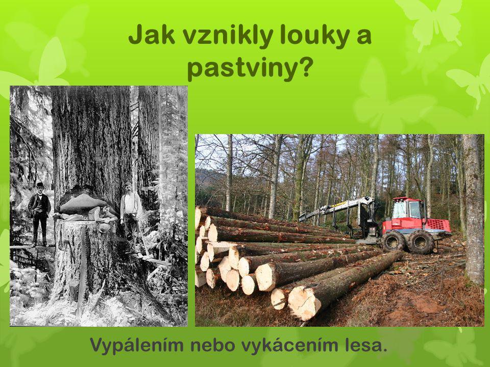 Jak vznikly louky a pastviny? Vypálením nebo vykácením lesa.