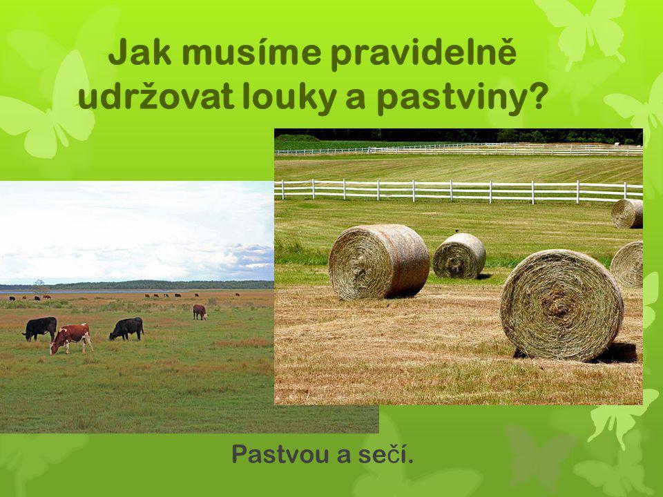 Jak musíme pravideln ě udr ž ovat louky a pastviny? Pastvou a se č í.