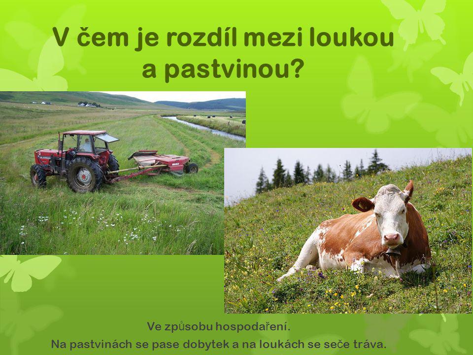V č em je rozdíl mezi loukou a pastvinou? Ve zp ů sobu hospoda ř ení. Na pastvinách se pase dobytek a na loukách se se č e tráva.