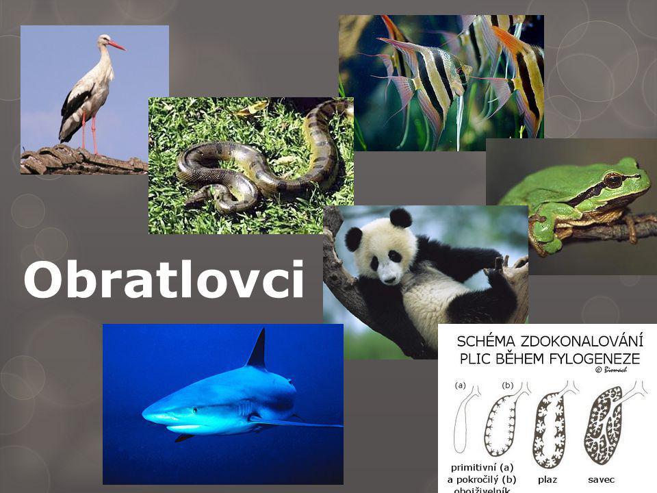  Ptáci – malé, málo roztažitelné - plicní vaky - vzduch 2x přes plíce