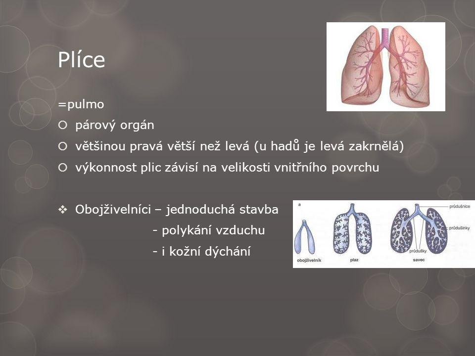 Plíce =pulmo  párový orgán  většinou pravá větší než levá (u hadů je levá zakrnělá)  výkonnost plic závisí na velikosti vnitřního povrchu  Obojživelníci – jednoduchá stavba - polykání vzduchu - i kožní dýchání