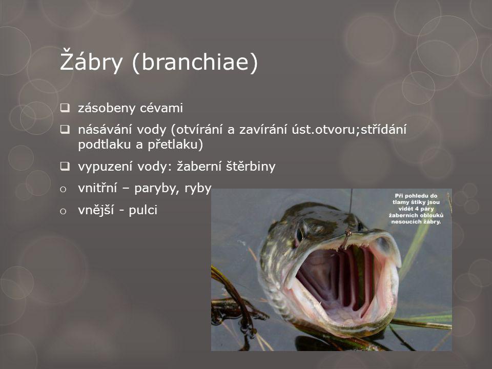 Žábry (branchiae)  zásobeny cévami  násávání vody (otvírání a zavírání úst.otvoru;střídání podtlaku a přetlaku)  vypuzení vody: žaberní štěrbiny o vnitřní – paryby, ryby o vnější - pulci