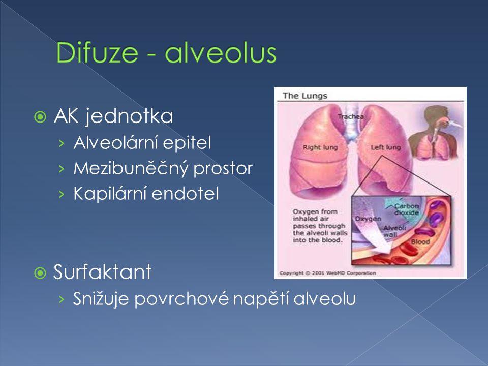  AK jednotka › Alveolární epitel › Mezibuněčný prostor › Kapilární endotel  Surfaktant › Snižuje povrchové napětí alveolu