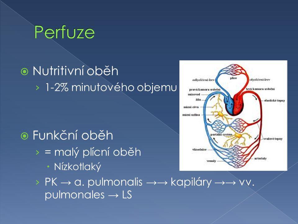  Nutritivní oběh › 1-2% minutového objemu  Funkční oběh › = malý plícní oběh  Nízkotlaký › PK → a. pulmonalis →→ kapiláry →→ vv. pulmonales → LS