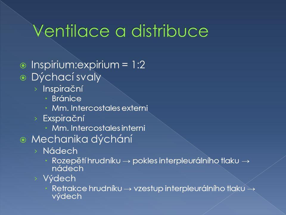  Inspirium:expirium = 1:2  Dýchací svaly › Inspirační  Bránice  Mm. Intercostales externi › Exspirační  Mm. Intercostales interni  Mechanika dýc