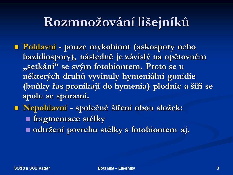 SOŠS a SOU Kadaň 13Botanika – Lišejníky Které pojmy spolu souvisí.