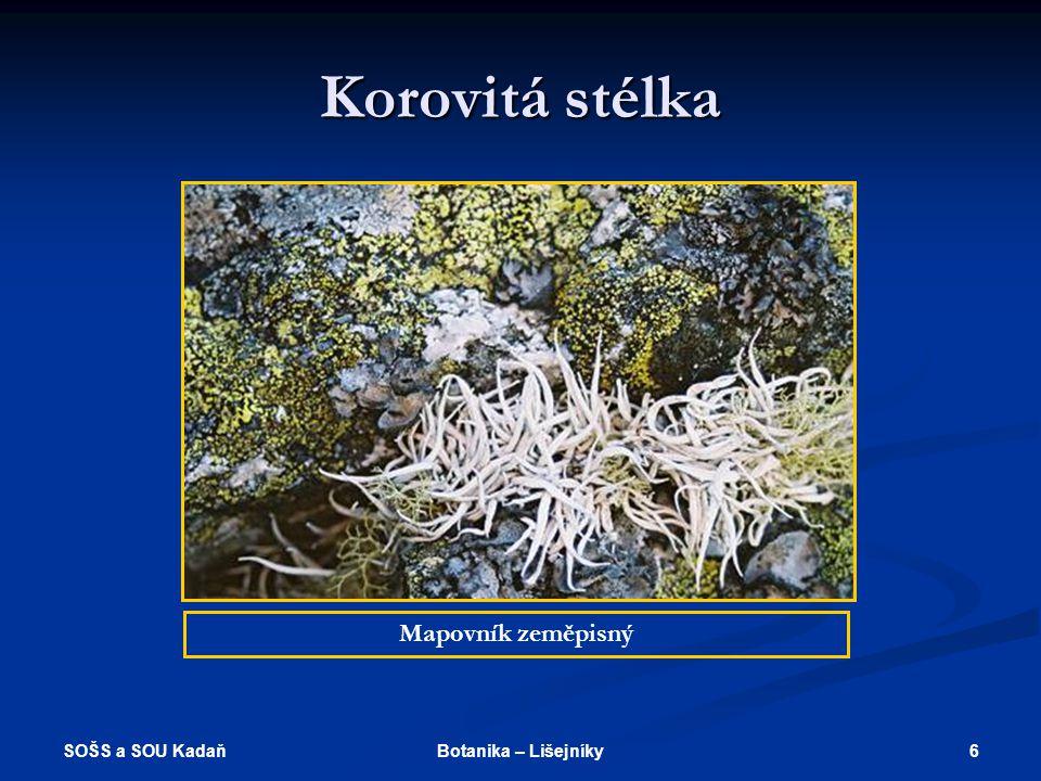 SOŠS a SOU Kadaň 16Botanika – Lišejníky Použité zdroje http://botany.upol.cz/atlasy/system/14- lichenes.html http://botany.upol.cz/atlasy/system/14- lichenes.html http://botany.upol.cz/atlasy/system/14- lichenes.html http://botany.upol.cz/atlasy/system/14- lichenes.html http://www.naturfoto.cz http://www.naturfoto.cz http://www.naturfoto.cz http://www.tatry.cz http://www.tatry.cz http://www.tatry.cz Kincl, L., Kincl, M., Jarklová, J.: Biologie rostlin.