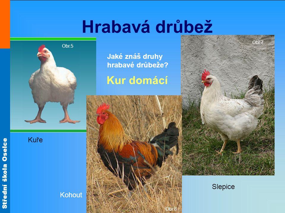 Střední škola Oselce Je kuřecí maso snadno stravitelné.