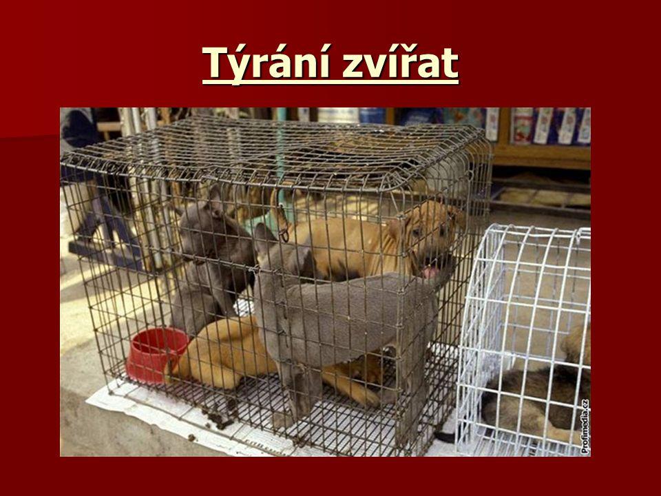 Týrání zvířat