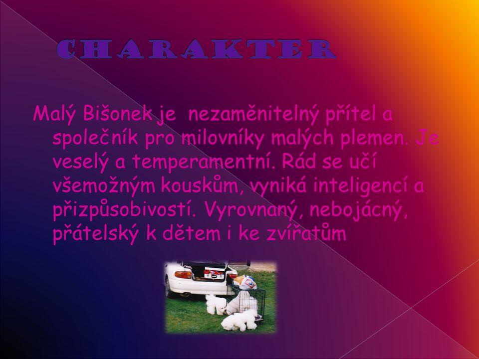 Malý Bišonek je nezaměnitelný přítel a společník pro milovníky malých plemen.