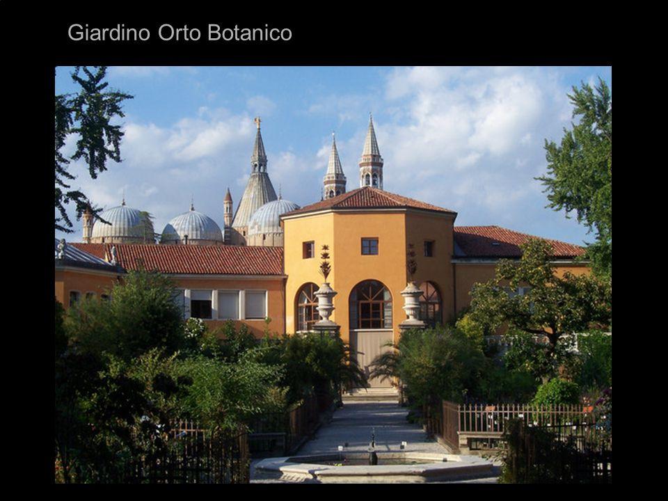 Na univerzitě přednášel 19 let matematiku Galileo Galilei Roku 1545 byla při fakultě medicíny založena první a nejstarší botanická zahrada v Evropě, fungující dodnes