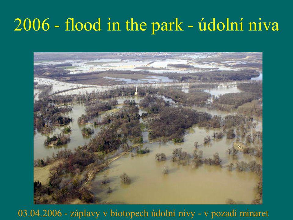 2006 - flood in the park - údolní niva 03.04.2006 - záplavy v biotopech údolní nivy - v pozadí minaret