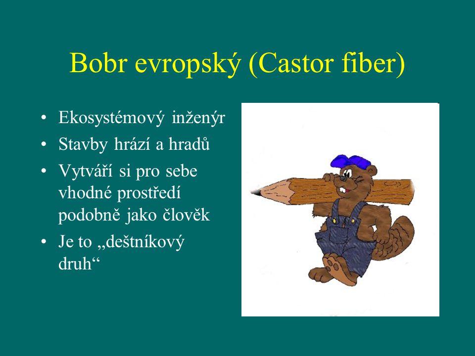 """Bobr evropský (Castor fiber) Ekosystémový inženýr Stavby hrází a hradů Vytváří si pro sebe vhodné prostředí podobně jako člověk Je to """"deštníkový druh"""