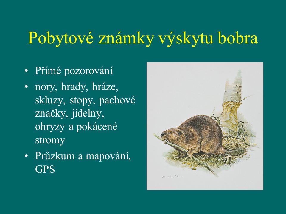 Pobytové známky výskytu bobra Přímé pozorování nory, hrady, hráze, skluzy, stopy, pachové značky, jídelny, ohryzy a pokácené stromy Průzkum a mapování